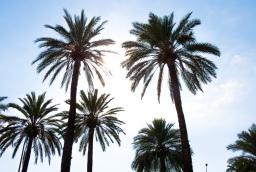 Palma de Mallorca, España